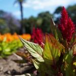 3 cose da fare a Melbourne nella natura