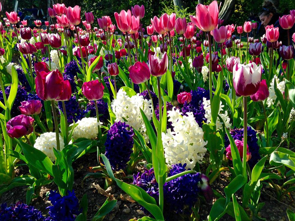 Le migliori fioriture di tulipani in italia travel on art for Tulipani italiani