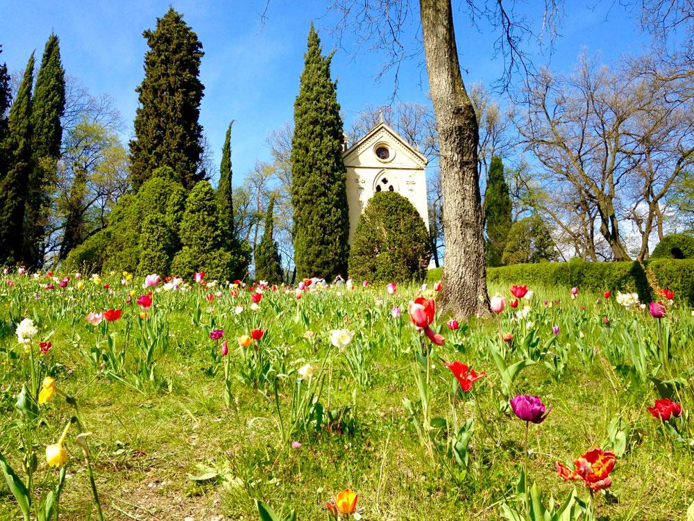 fioriture di tulipani in italia