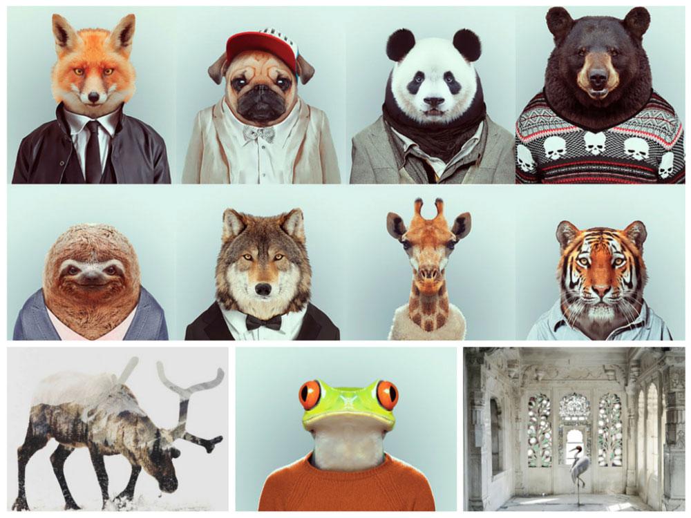 zoo-arte