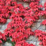 Foliage in Lombardia: viaggio nei colori di Montesegale