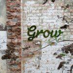 Street art a difesa dell'ambiente: quando l'arte vuole essere sociale