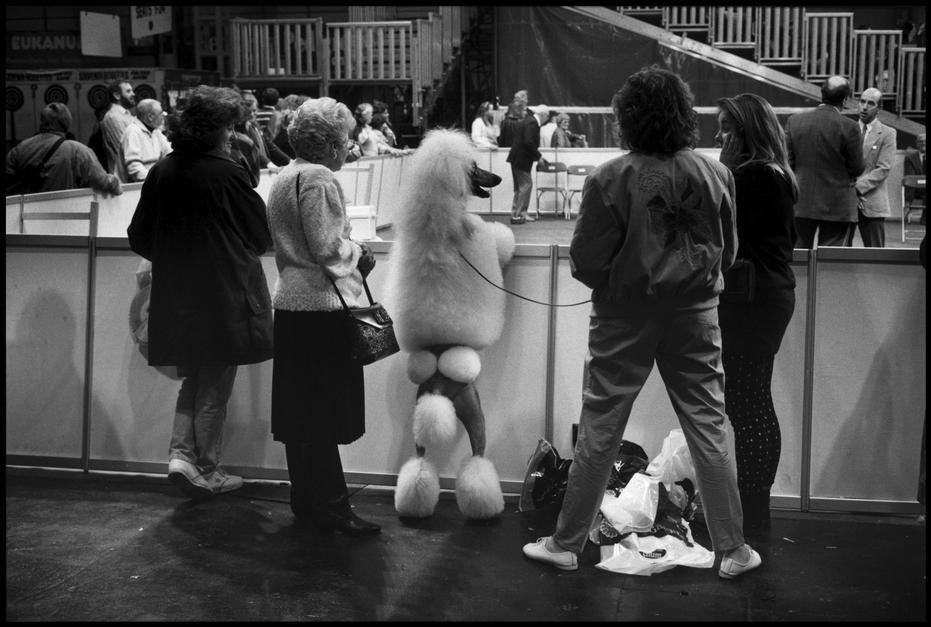 elliott erwitt cani