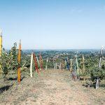 Arte contemporanea nelle Langhe: itinerario tra street art e installazioni